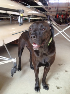This is Emma, the boathouse dog at Wayland-Weston Crew!